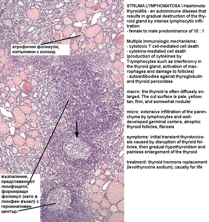 Index of /Medics/09_Regeneration-Repair & Immunopathology
